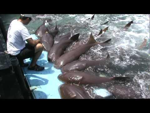 Show de Tubarões  San Andres Caribe Colombiano