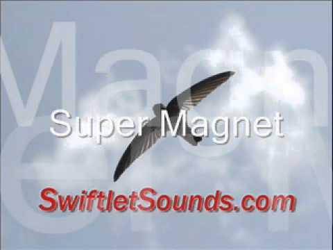 Swiftlet Sounds - Super Magnet External video