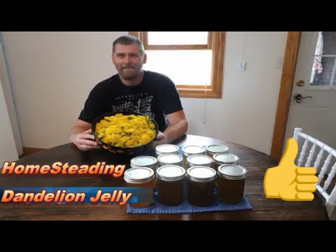 How to Make Dandelion Jelly  the simple way Step by Step