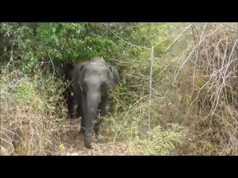 Sri Lanka July 2014 video