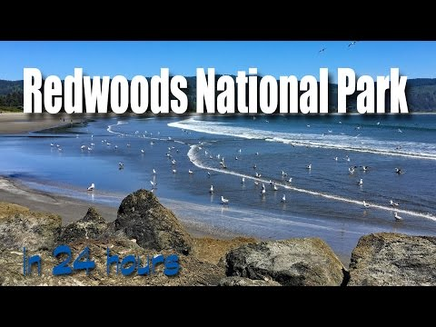 24 Hours in Redwood National Park California