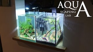 Aquascaping Lab - Tutorial Nano Cube Aquarium (size 20 x 20 x 25H 10L) Stone grass and wood style