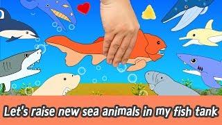 [EN] Let's raise new sea animals in my fish tank! animals animation for kids, animal namesㅣCoCosToy