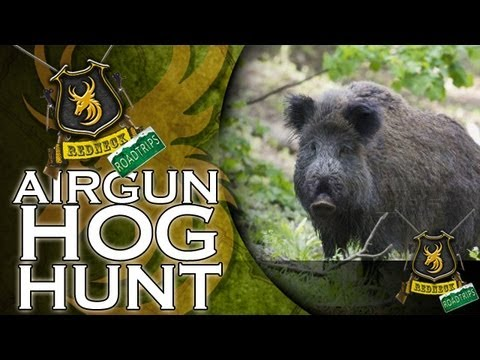 Hunting Hogs with a Big Bore Airgun