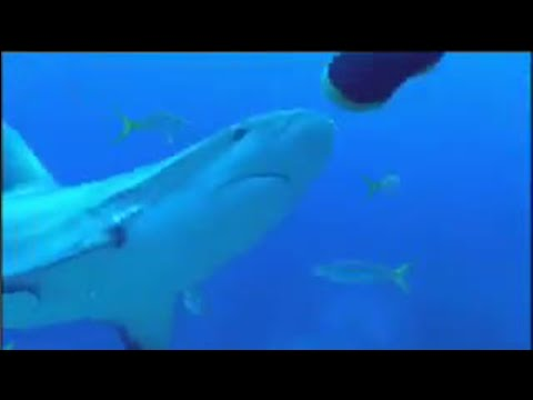 ESP of sharks - BBC