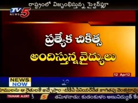 Swine Flu Disease To Attack AP In Summer (TV5)