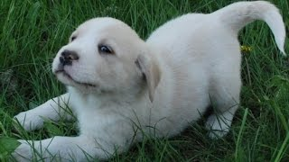 Os cachorrinhos mais fofos do mundo- The cutest puppies in the world