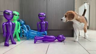 Dogs pranked with ALIENS from AREA 51 : Funny Dogs Louie and Marie