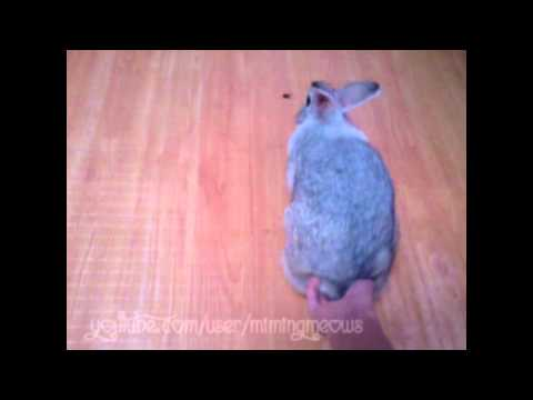 Butt massage with a bunny