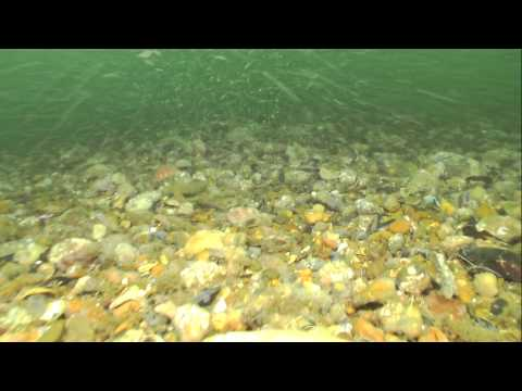 REX Dive 048 AHOB Survey, Happisburgh