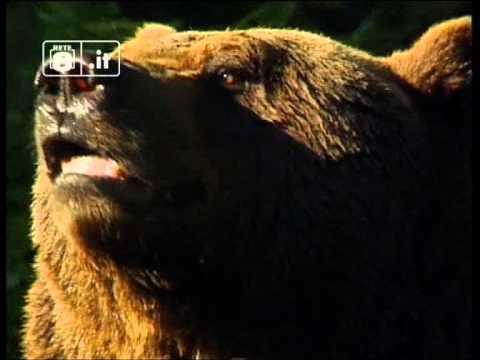 Orso investito, animali da proteggere