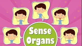 Human Sense Organs | Videos for Kids | It's AumSum Time