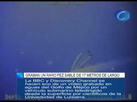 Graban un pez sable gigantesco de más de 17 metros