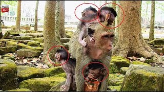 OMG Why a lot of baby monkeys are crying? Why Eiden Newborn cry almost die Youlike Monkey 1526