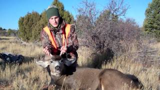 Colorado 2011 Mule Deer Hunting (Unit 62 Third Rifle) - 5 bucks down