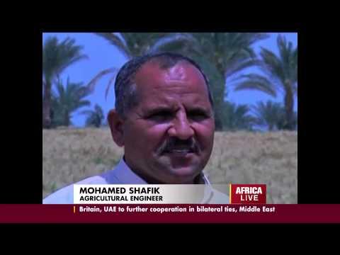 Egypt Wheat Farming