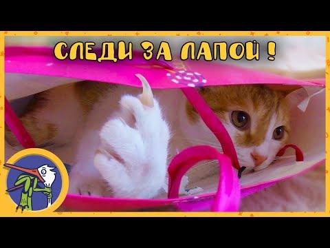 Котик Рыжик стал мамой или веселые приключения в коробке