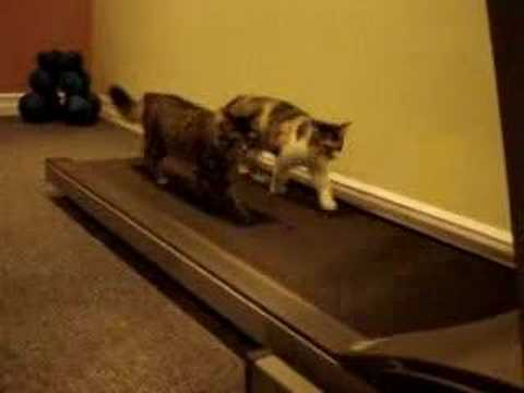 Funny Cats - You'll laugh