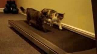Funny Cats - You'll laugh