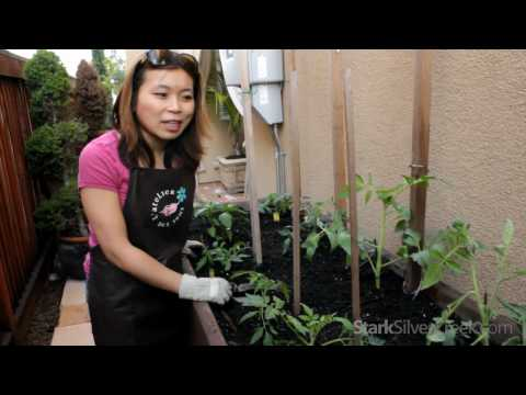 Urban Vegetable Gardening #4: Planting Tips