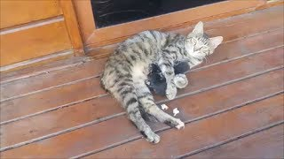 Cat mom hugs and cleans her newborn kittens | 3 hours after birth
