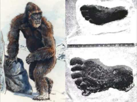 CRIPTOZOOLOGIA - CRYPTOZOOLOGY - Bigfoot - Mothman - Nessy - Animales Bizarros -