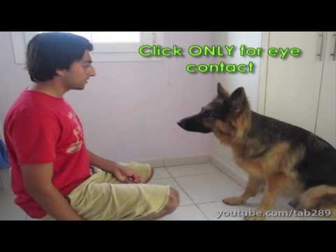 0 Dog Training Tutorial: Building Eye Contact & Attention!