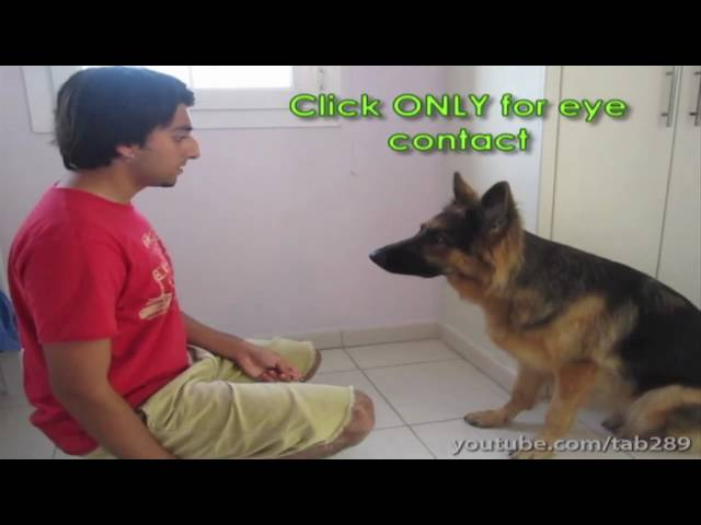 Dog Training Tutorial: Building Eye Contact & Attention!