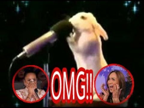 Top 5 best auditions animals, America's Got talent 2017 thumbnail