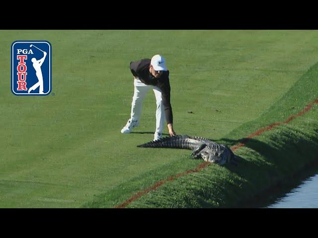 PGA TOURвs best animal encounters of the decade 2010-19