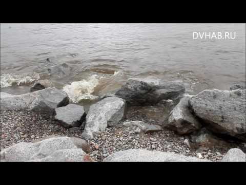 Уровень Амура в черте Хабаровска 28 августа