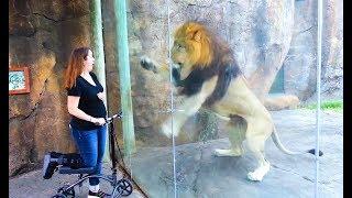 Coole Videos #323    ✪ Stern DuTube