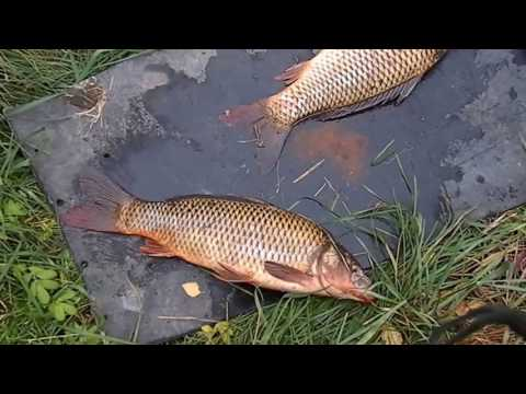 рыбалка в скородное