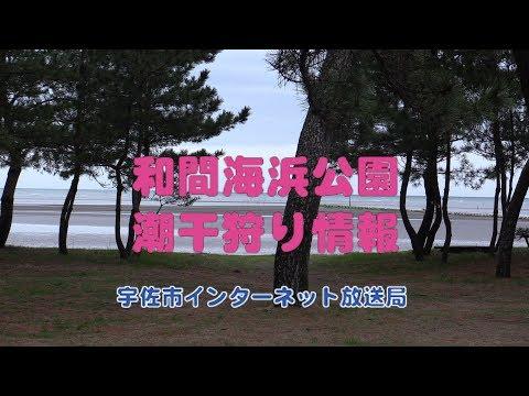 和間海浜公園潮干狩り情報