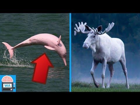 5 mysteriöse Tiere - die so wirklich existieren!