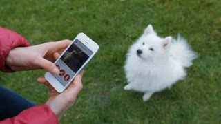 Crave - App turns you into the dog whisperer, Ep. 148