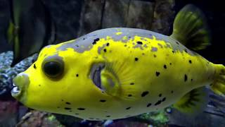 ALPHABET SEA & WATER ANIMALS (Part 2) Educational Children Video