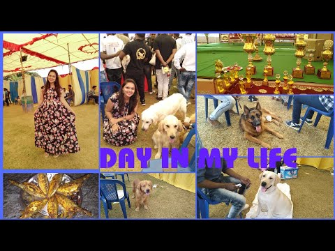 DIML#Sunday Vlog||Vizag Best Dog Show||Fish Fry Recipe||