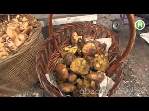 Десять тысяч евро -- под носом! Где в Украине растут трюфеля?!