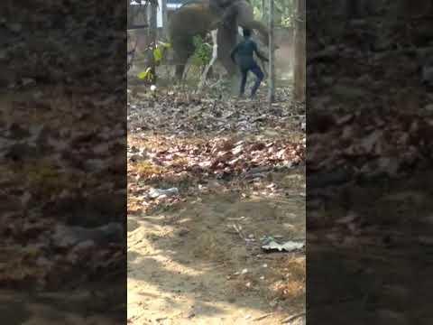 Dangerous elefant