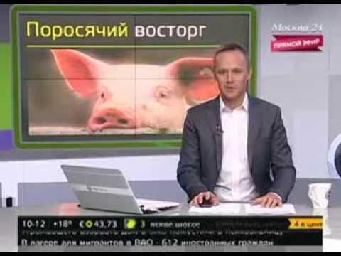 Свиньи парализовали движение на автомагистрали в Китае.