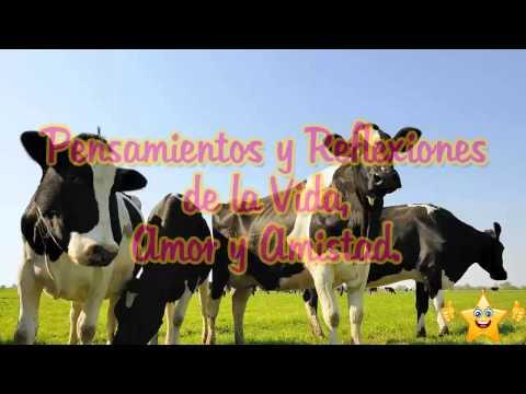 La vaca, Una historia sobre como deshacernos del conformismo y la mediocridad