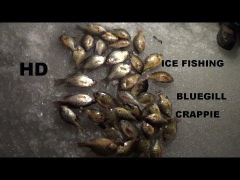 Ice Fishing Bluegill Ice Fishing Bluegill Crappie