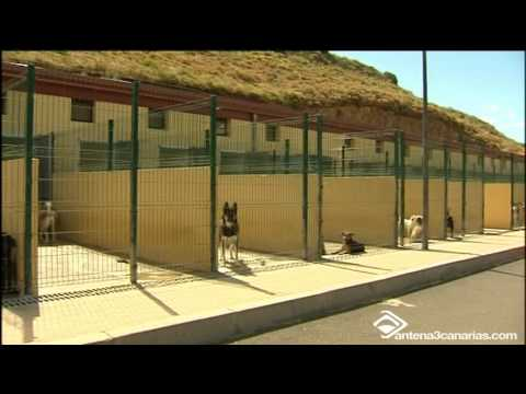 Perro Pit Bull ataca a tres personas en San Diego