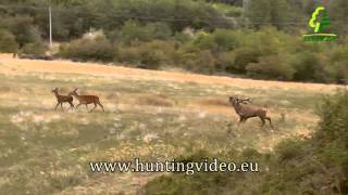 Red Stag Hunting In Hungary Sefag Zrt.(HD)