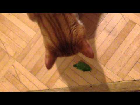 Sparkles the cat in 'Spinach Eating Cat'