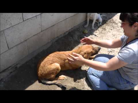 Animalinneed: Video of Javi and Happy