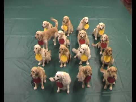 Pets Teach Science: 16 golden retrievers explain atoms