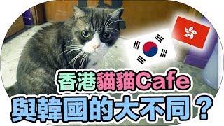 【Vlog】香港的貓貓Cafe與韓國的大不同?|Mira