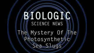 Science News - The Mystery Of The Photosynthetic Sea Slugs